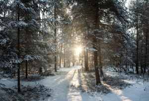 WinterDH2015